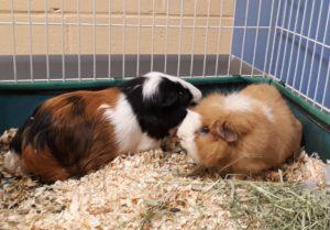 Meet Fatty & Spunky