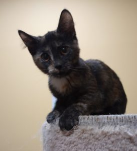 Meet Salem