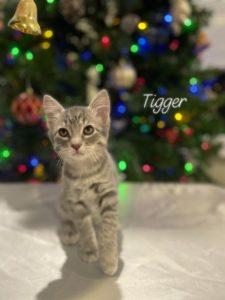 Meet Tigger