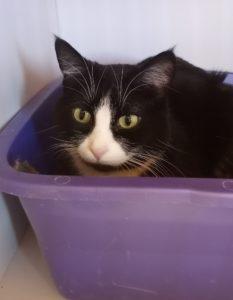 Meet Tiki